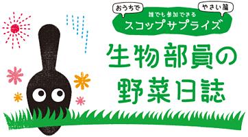 野菜を育てる観察日記